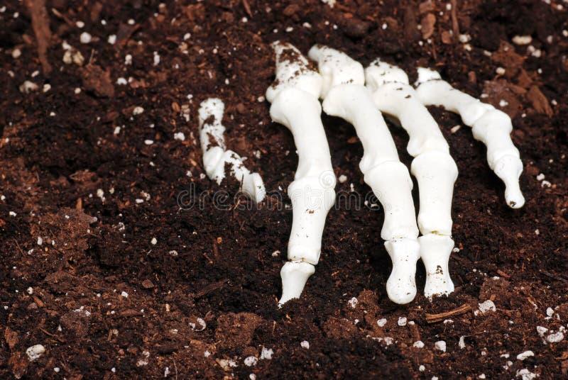 Main squelettique en saleté image libre de droits
