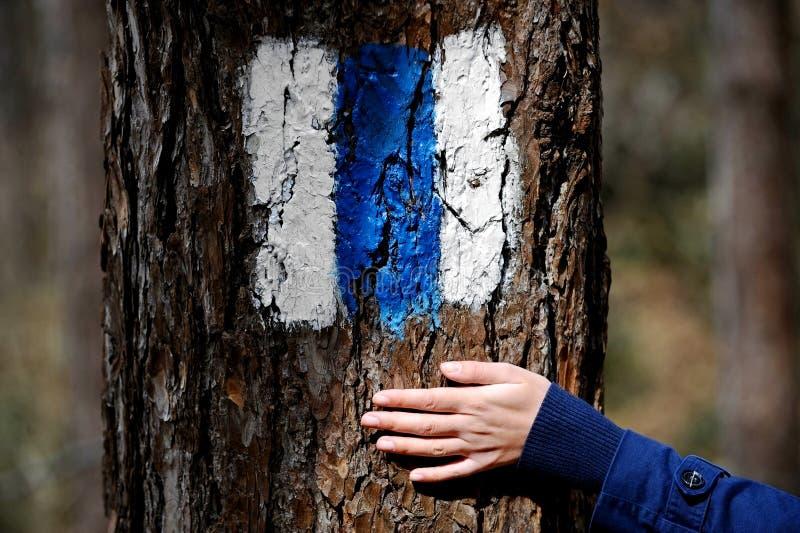Main sur une écorce d'arbre montrant un signe de hausse photo libre de droits