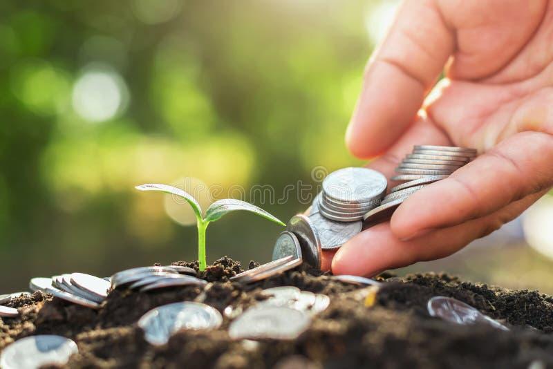 main tenant l'argent mettant sur le sol et le jeune élevage photo libre de droits