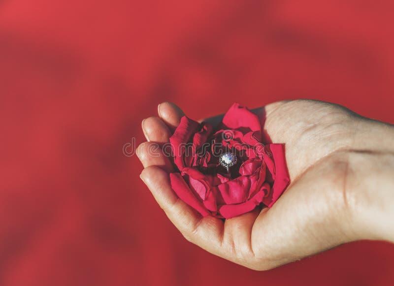 Main tenant la rose rouge avec la bague à diamant photos stock