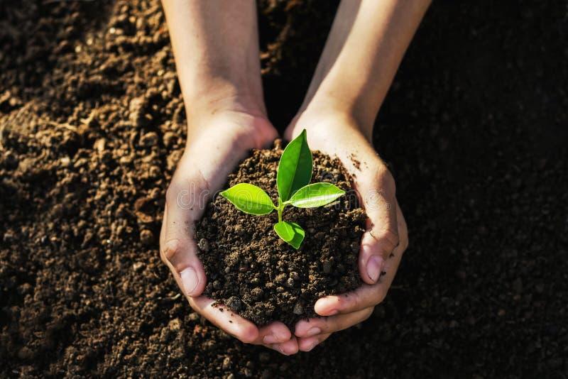 main tenant le jeune arbre pour la plantation r photographie stock