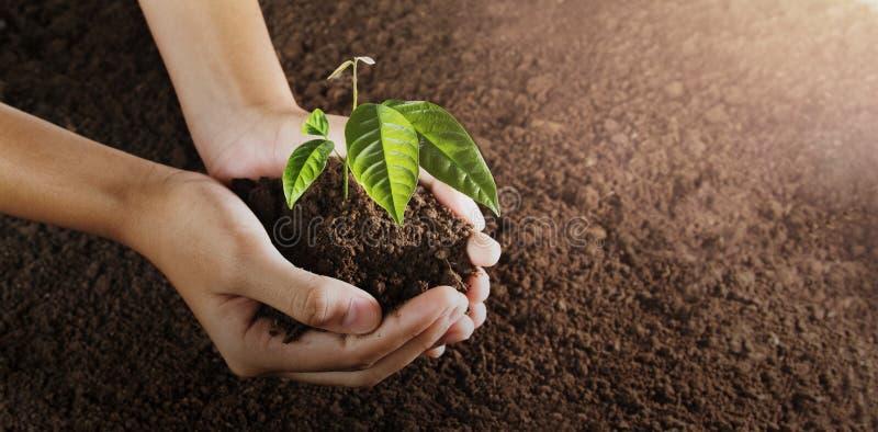 main tenant le petit arbre pour la plantation monde vert de concept jour de terre d'eco photo libre de droits