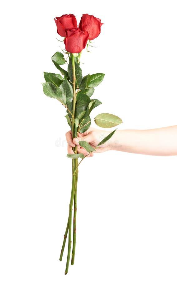 Main tenant trois roses image stock
