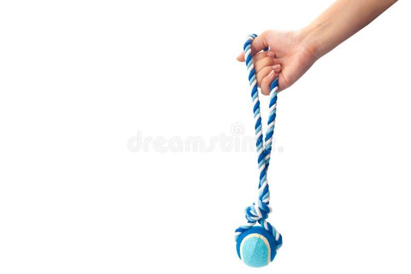 Main tenant une corde bleue de chien de couleur image stock