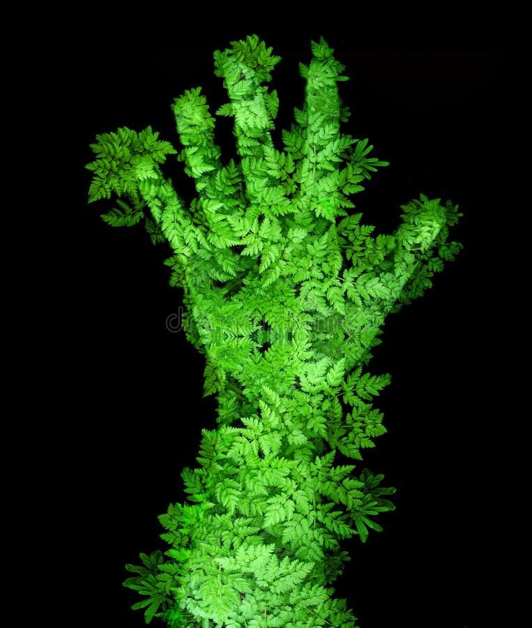 Main verte illustration libre de droits