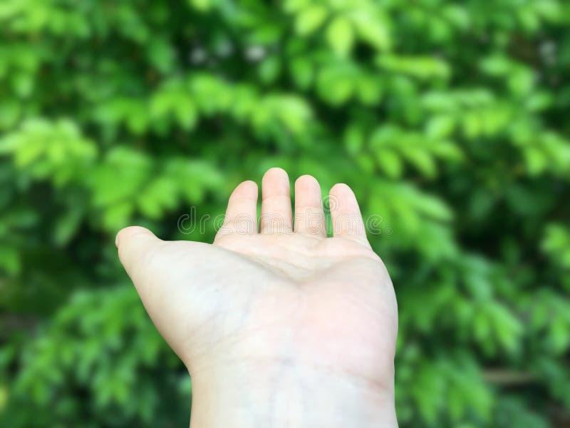 Main vide ouverte de femme dans l'en avant devant le petit fond vert de feuilles image libre de droits
