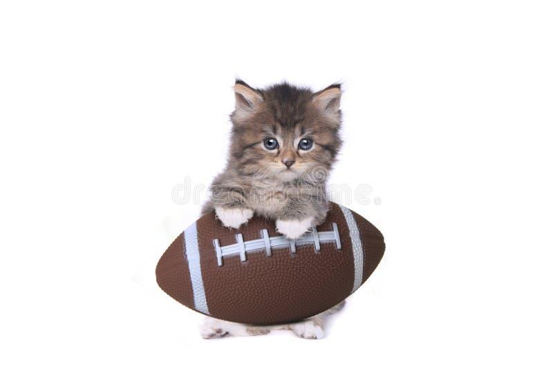 Maincoon dulce Kitten With un fútbol imagenes de archivo