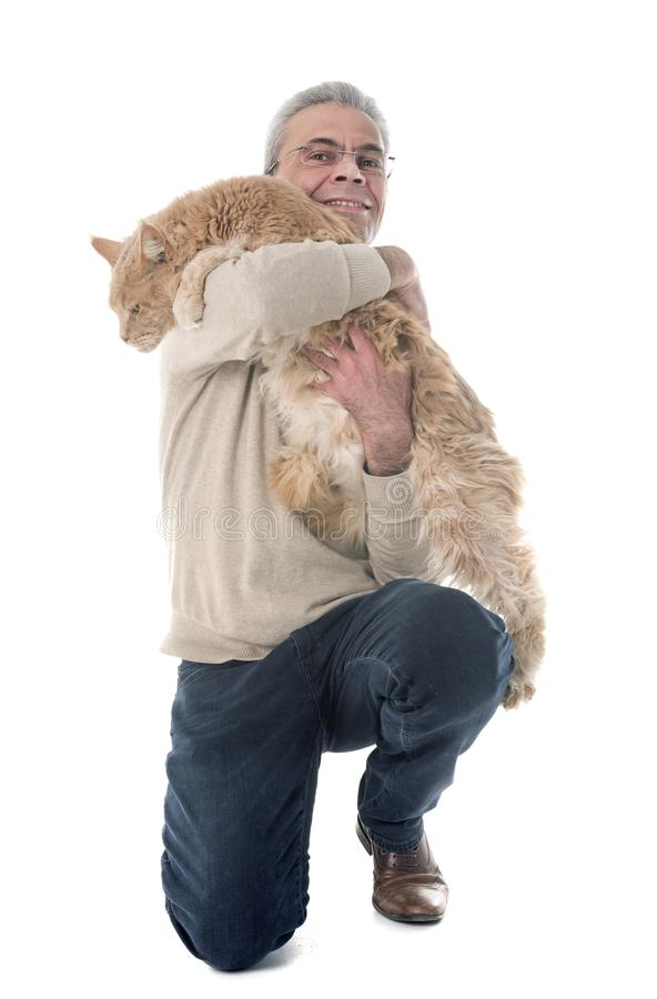 Maine coon cat and man royalty free stock photo