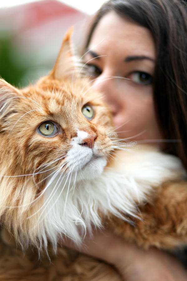 Maine Coon Cat Owner stock fotografie