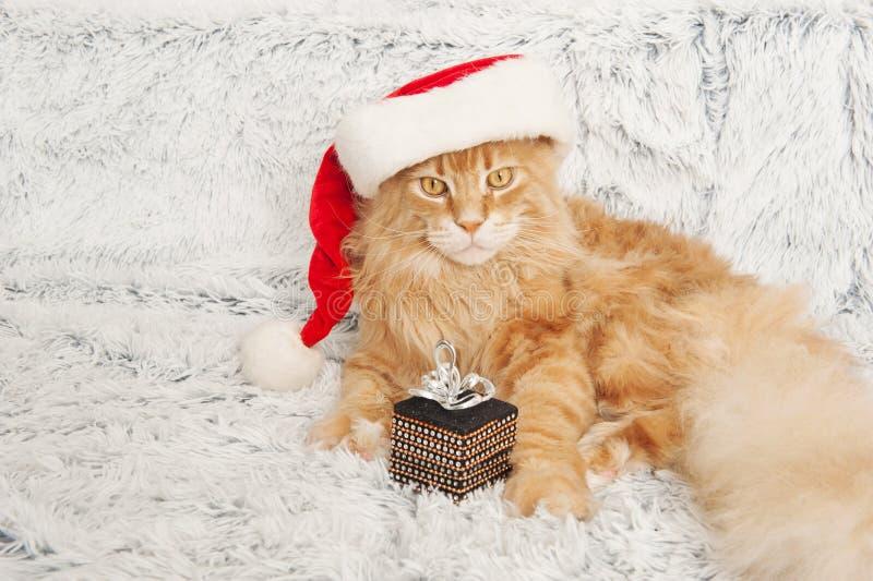 Maine Coon cat in Santa Claus hat stock photos