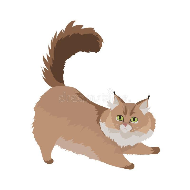 Maine Coon Cat Vector Flat designillustration royaltyfri illustrationer
