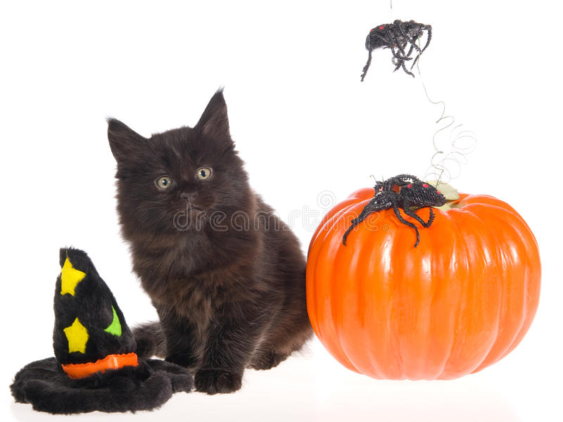 Download Maine Coon With Halloween Props Stock Photo - Image: 9698782
