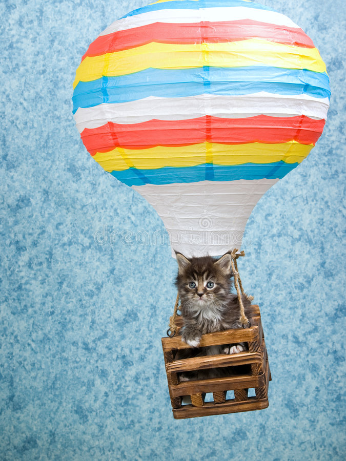 Download Maine Coon Kitten In Hot Air Balloon Stock Photo - Image of balloon, kitties: 9349764