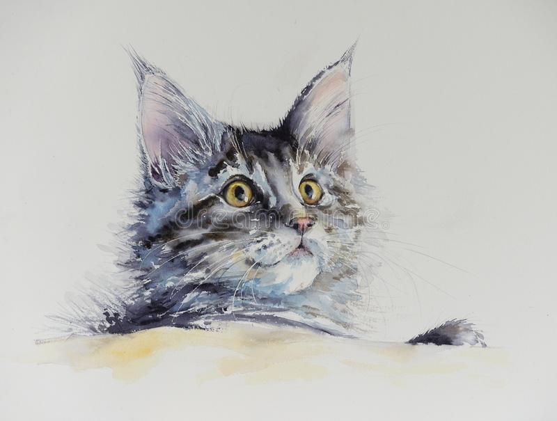 Maine coon watercolors painted. royalty free illustration