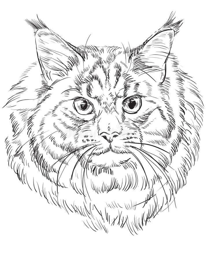 Maine Coonkatt royaltyfri illustrationer