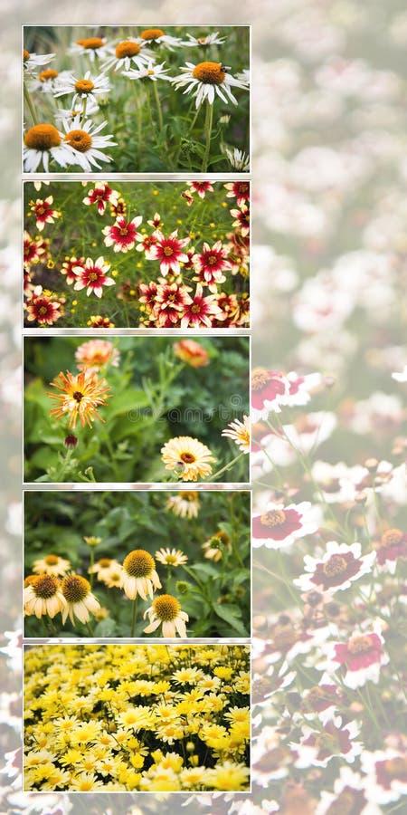 Maine Flower Collage Stock Photos