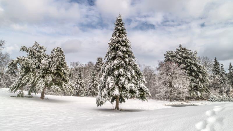 Maine Holiday Winter Landscape Scene stock foto