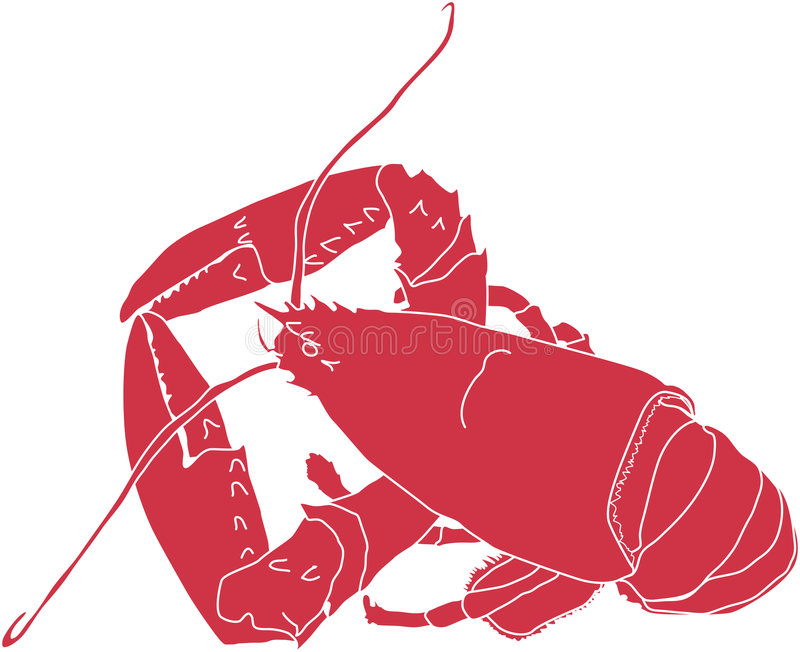 Maine Lobster. Illustration of a Maine lobster in red and white outline on the white background vector illustration