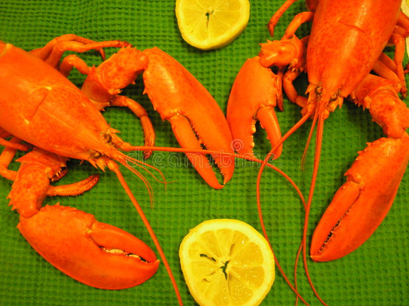 Maine Lobster Picnic Setting Stock Images