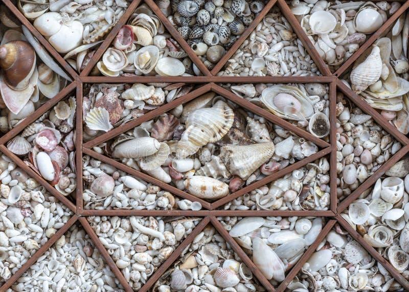 Maine plaży Shell kolekcja obraz stock