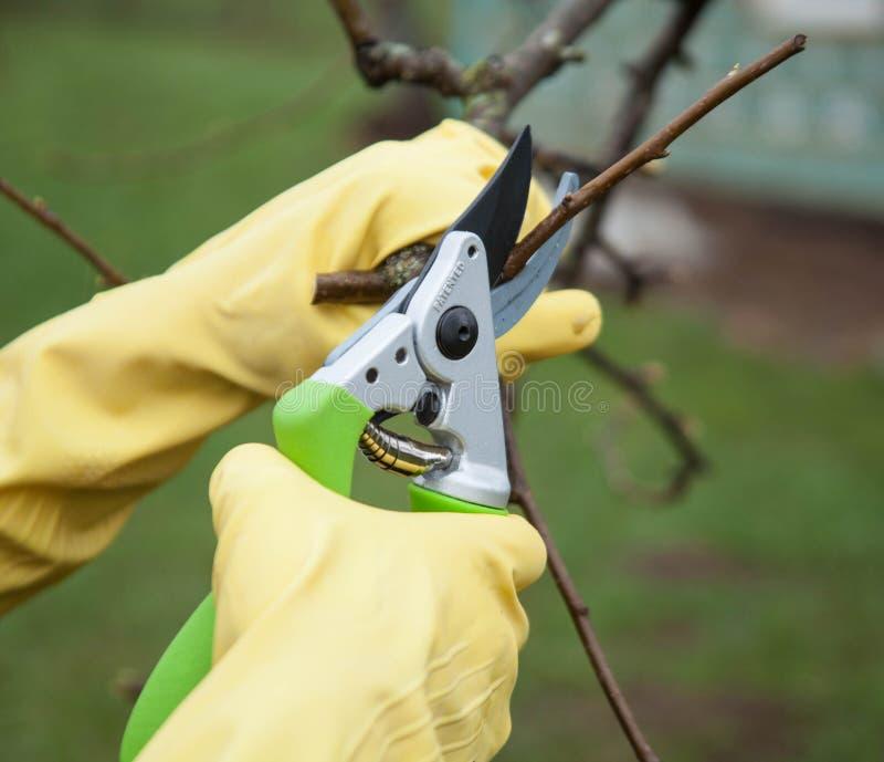 Mains avec des gants de jardinier effectuant des travaux d'entretien photo libre de droits
