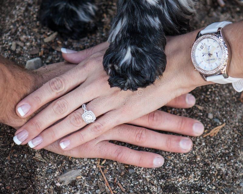 Mains avec la bague de fiançailles et la patte de chiens images libres de droits