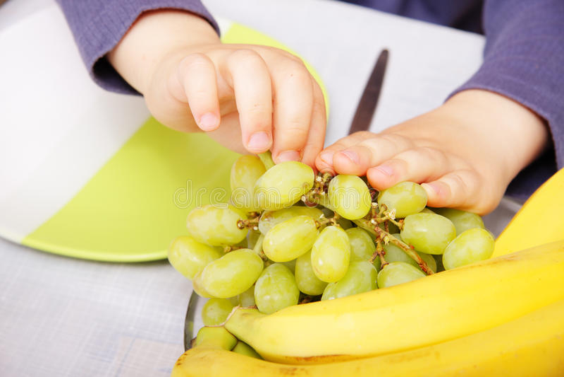 Mains d'enfant pinçant des raisins photos stock