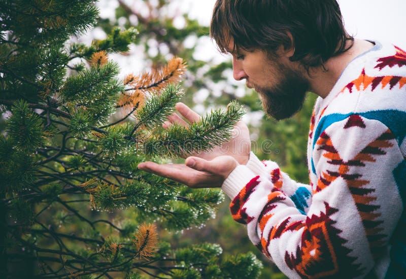 Mains d'homme tenant le mode de vie de voyage de branche d'arbre de sapin image libre de droits