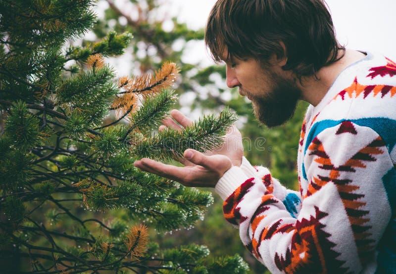 Mains d'homme tenant le mode de vie de voyage de branche d'arbre de sapin photographie stock