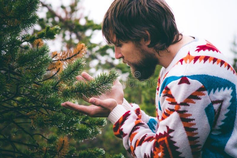 Mains d'homme tenant le mode de vie de voyage de branche d'arbre de sapin photographie stock libre de droits