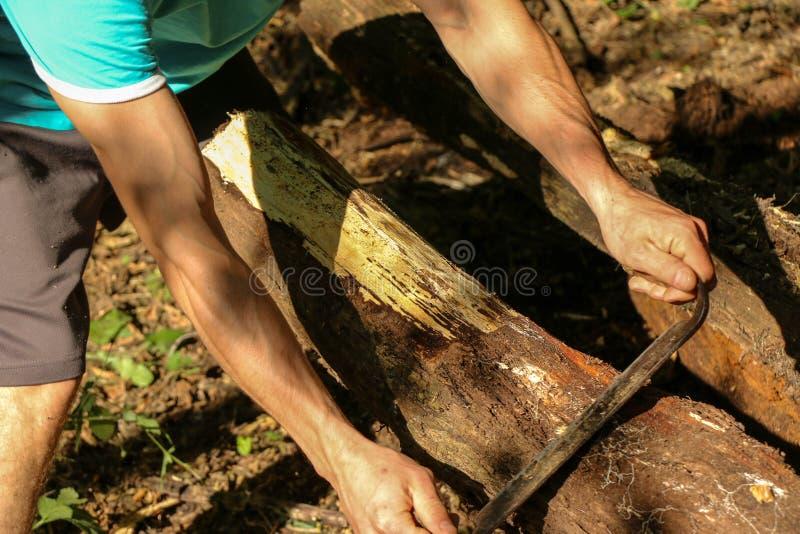 Mains d'un charpentier planté de bois, lieu de travail photo libre de droits