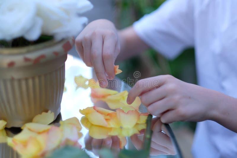 Mains d'un garçon avec des pétales de rose photo stock