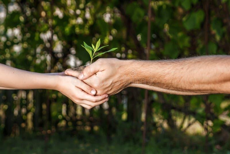 Mains d'un homme et d'un enfant tenant une jeune usine contre un fond naturel vert au printemps L'espace de copie de concept d'éc photos stock
