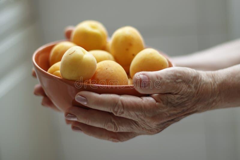 Mains d'une femme agée tenant une cuvette avec des abricots image stock