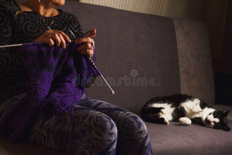 Mains d'une femme plus âgée tricotant à la maison avec le chat image stock