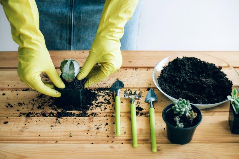 Mains d'une jeune femme plantant dans le pot de fleur photographie stock libre de droits