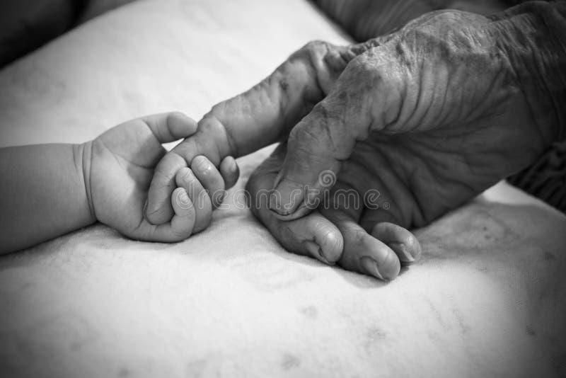 Mains de dame âgée Rebecca 36 photo libre de droits