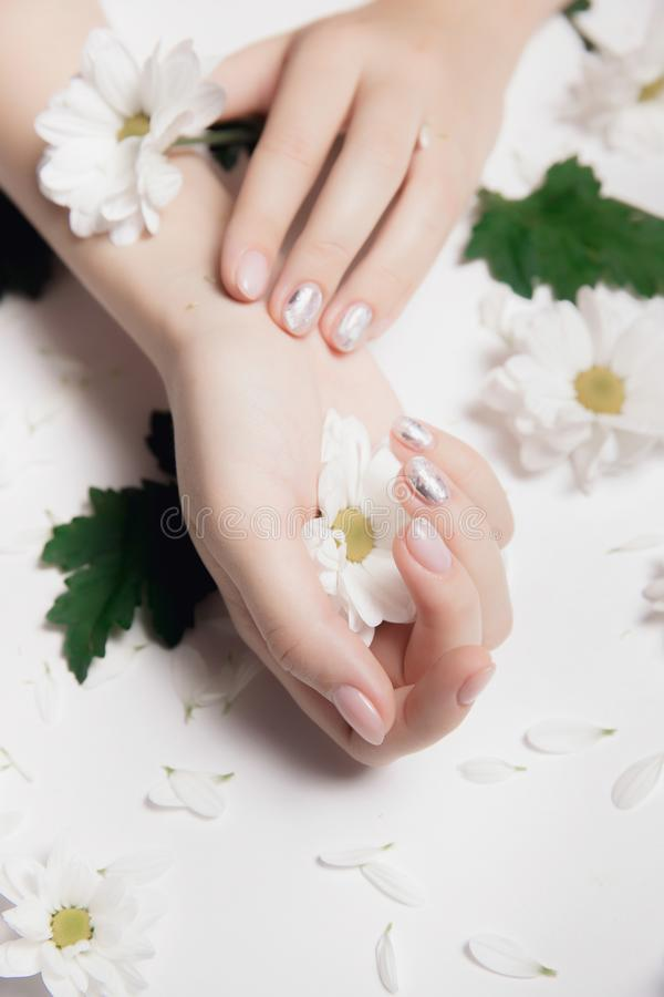 Mains de femme avec les chrysanthèmes d'ongle de manucure et blancs nus de camomille sur la lumière image stock