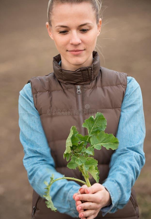 Mains de femme tenant la petite pousse verte de graine de colza images stock