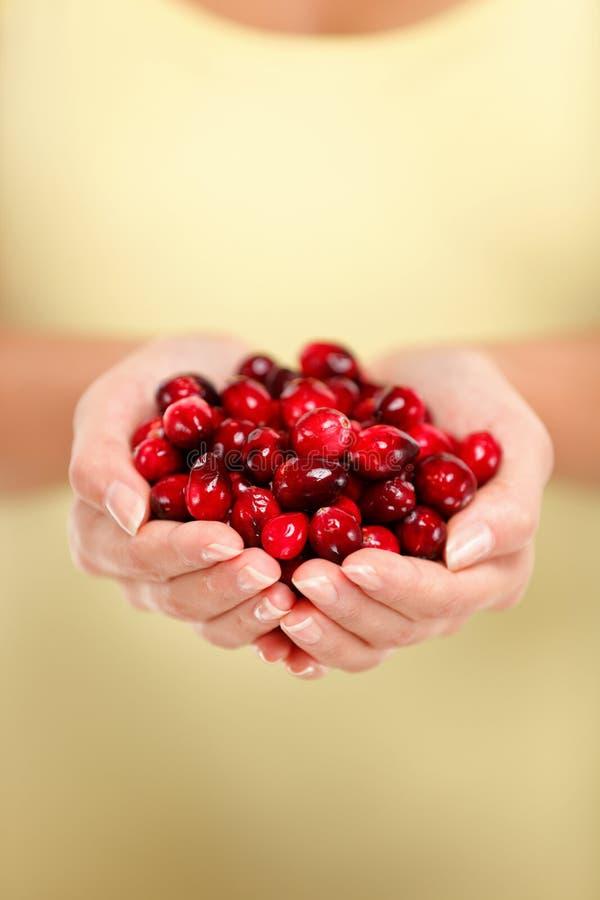 Mains de femme tenant le plan rapproché rouge frais de canneberges image stock