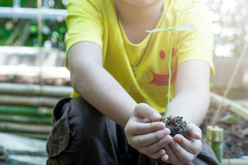 Mains de garçon plantant les jeunes plantes dans le sol au-dessus du fond et de la lumière du soleil de nature Usine de participa photo stock