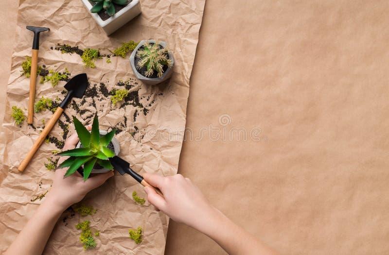 Mains de jardinier plantant la fleur dans le pot sur le papier de m?tier images libres de droits