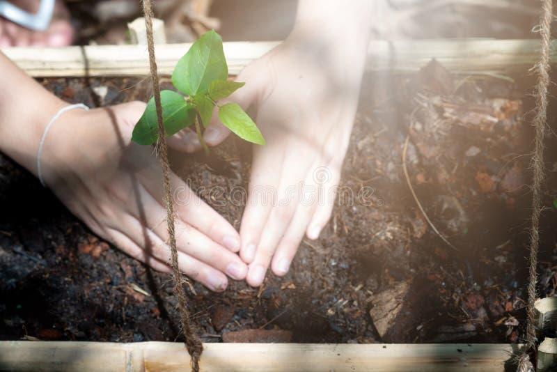 Mains de l'adolescence plantant les jeunes plantes dans le sol au-dessus du fond et de la lumière du soleil de nature Usine de pa images libres de droits