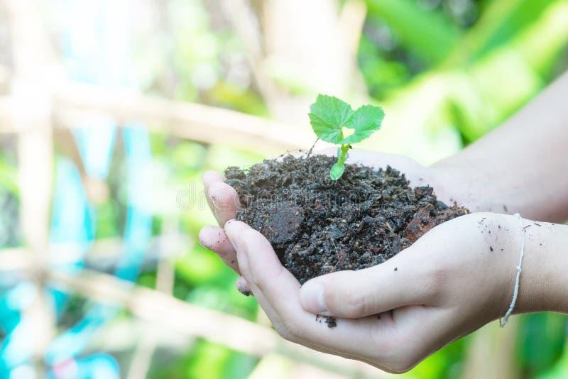 Mains de l'adolescence plantant les jeunes plantes dans le sol au-dessus du fond et de la lumi?re du soleil de nature Usine de pa photographie stock libre de droits