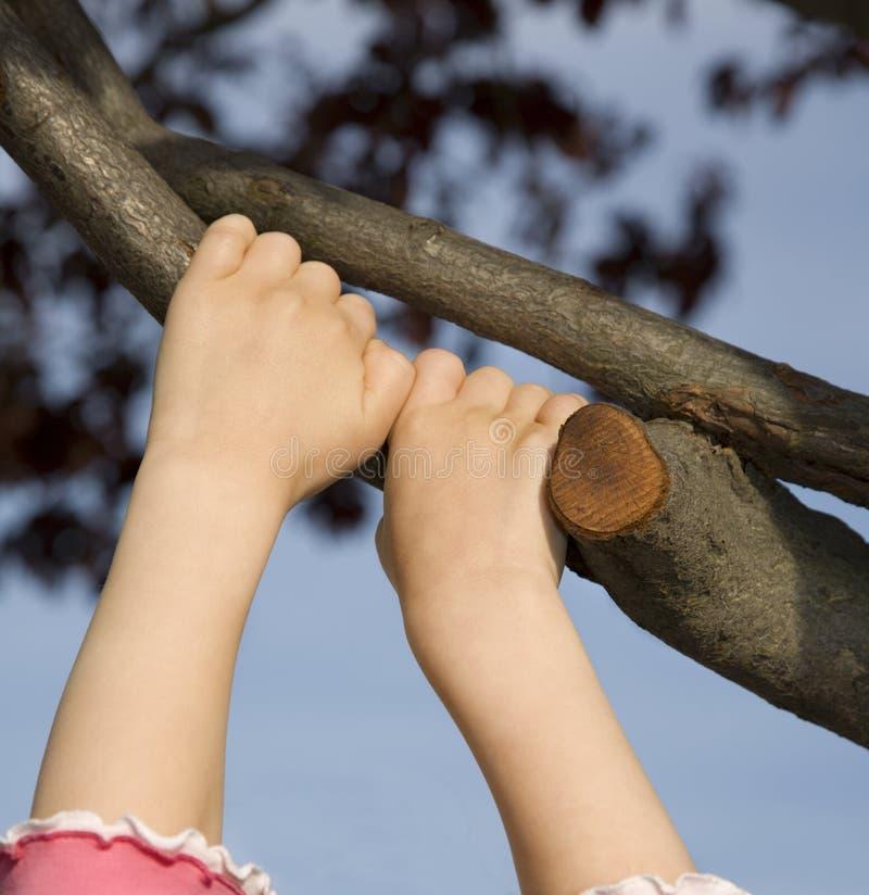 Mains de petite fille sur l'arbre image libre de droits