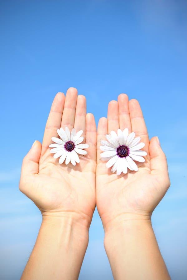 Mains et fleurs au-dessus de ciel bleu photos libres de droits