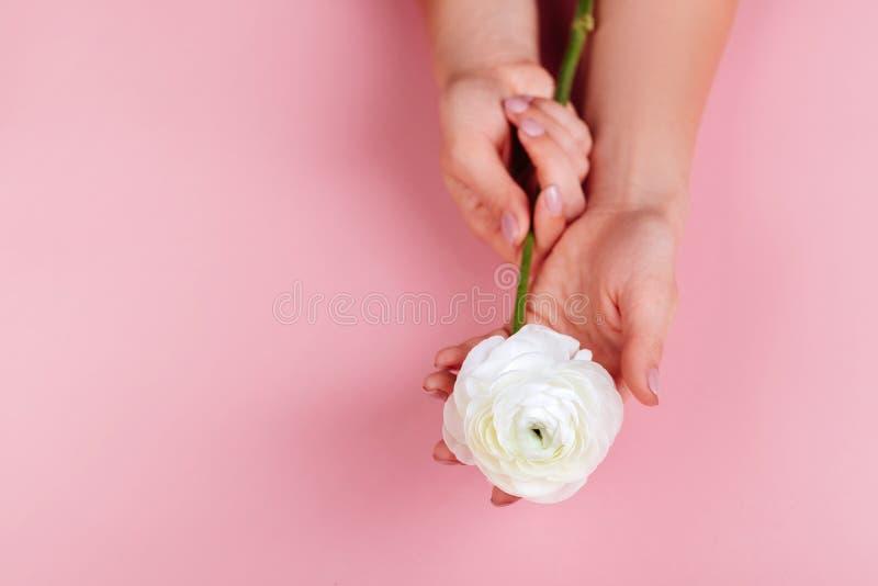 Mains femelles élégantes avec les ongles manucurés roses images stock