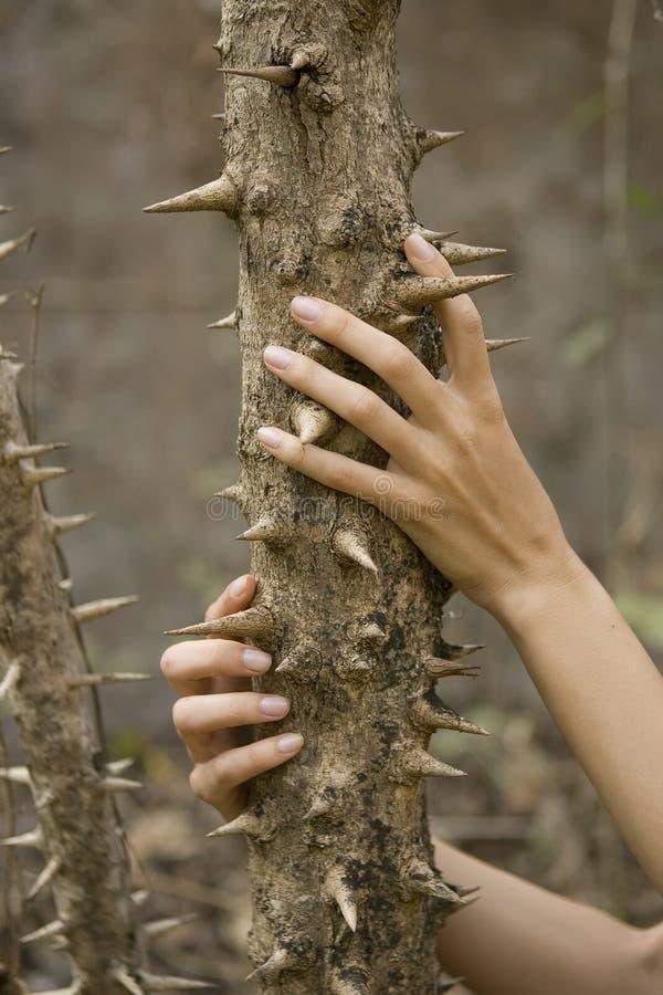 Mains femelles étreignant un tronc d'arbre épineux images stock