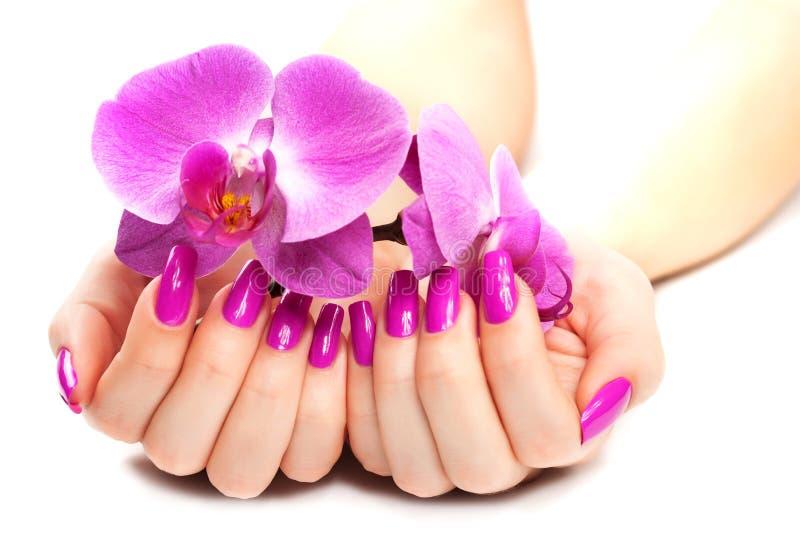 Mains femelles avec l'orchidée rose.  photo stock