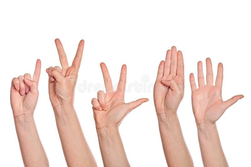 Mains femelles comptant d'un à cinq photo libre de droits